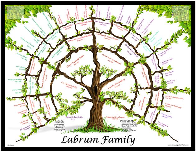 *New Tree 6 generation
